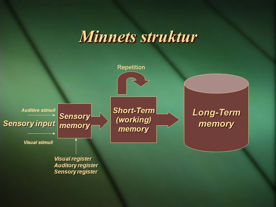Minnets struktur Long-Term memory Short-Term (working) Sensory memory