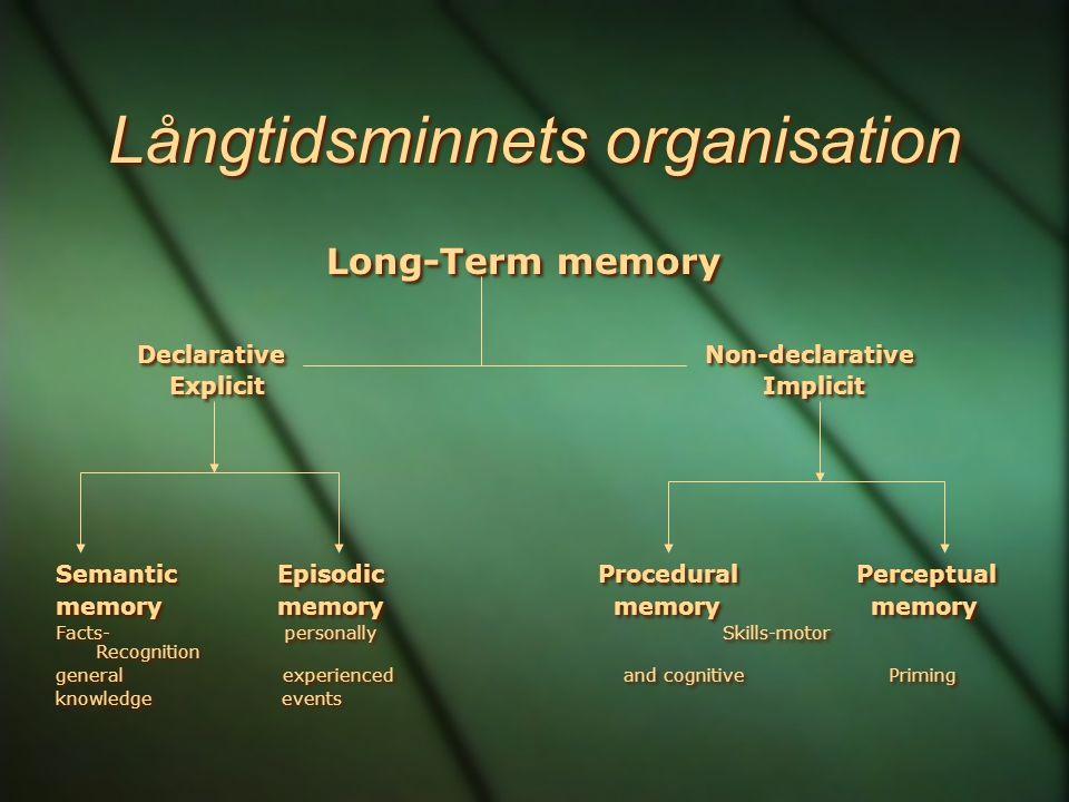 Långtidsminnets organisation