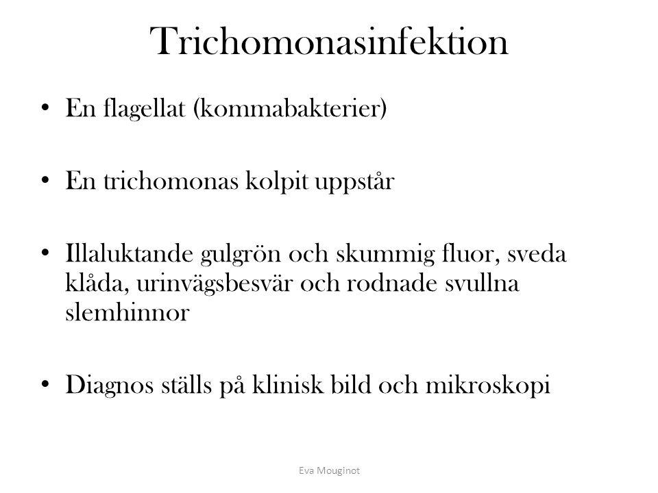 Trichomonasinfektion
