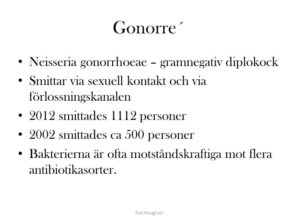Gonorre´ Neisseria gonorrhoeae – gramnegativ diplokock