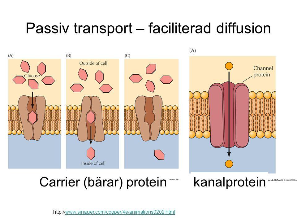 Passiv transport – faciliterad diffusion