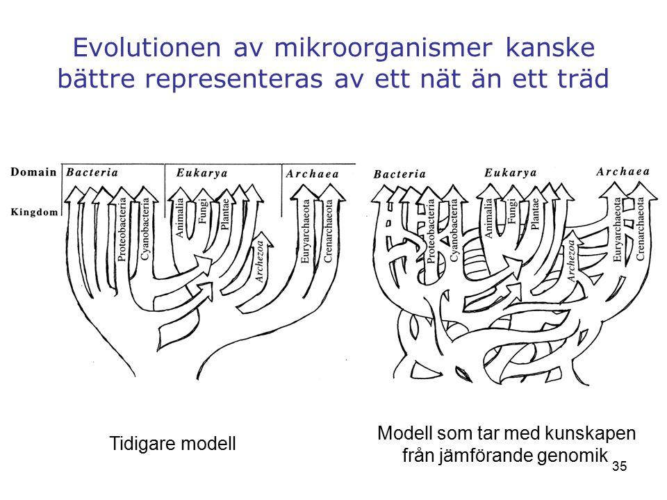 Evolutionen av mikroorganismer kanske bättre representeras av ett nät än ett träd