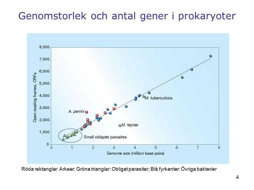 Genomstorlek och antal gener i prokaryoter