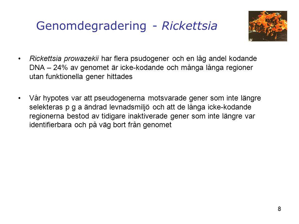 Genomdegradering - Rickettsia