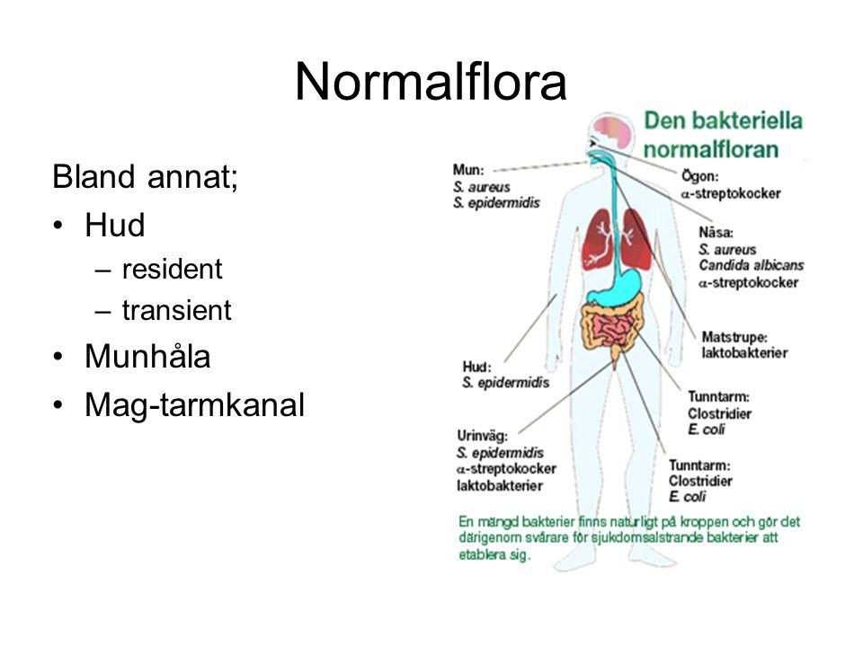 Normalflora Bland annat; Hud Munhåla Mag-tarmkanal resident transient