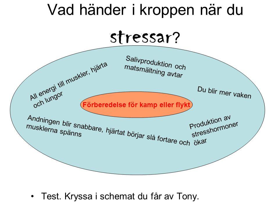 Vad händer i kroppen när du stressar