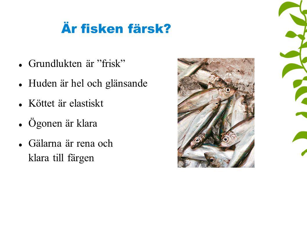 Är fisken färsk Grundlukten är frisk Huden är hel och glänsande
