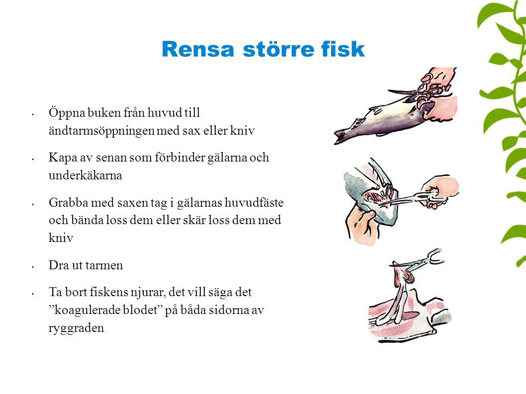Rensa större fisk Öppna buken från huvud till ändtarmsöppningen med sax eller kniv. Kapa av senan som förbinder gälarna och underkäkarna.