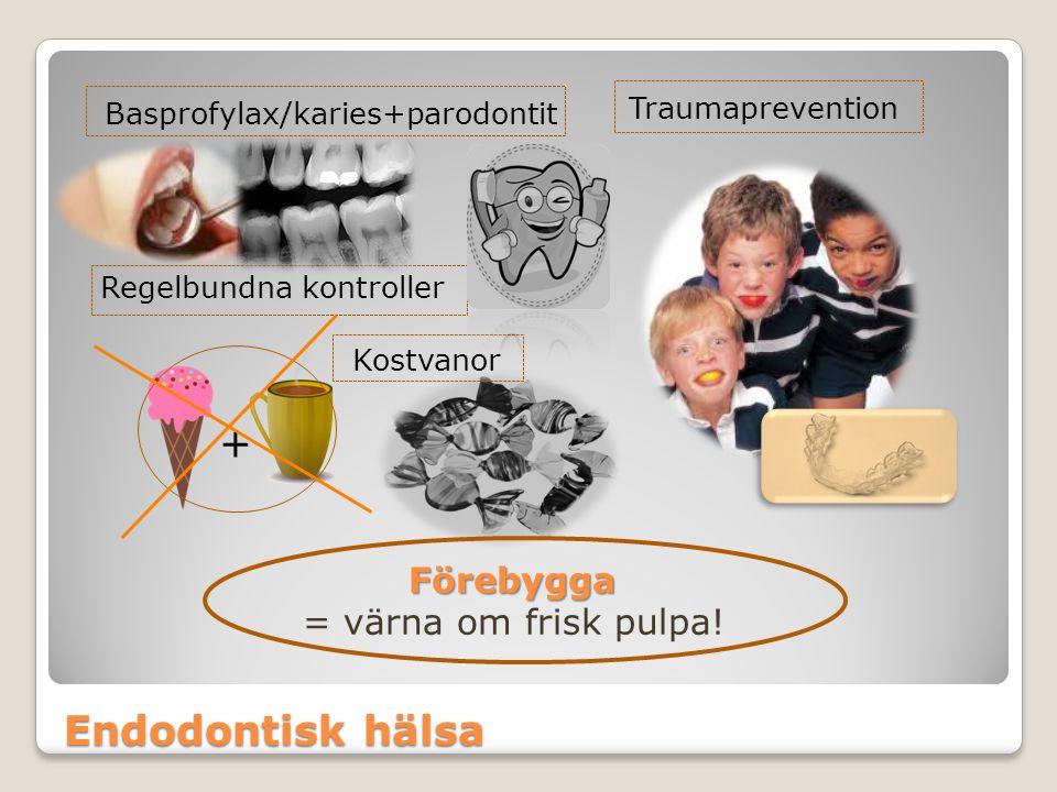 + Endodontisk hälsa Förebygga = värna om frisk pulpa! Traumaprevention