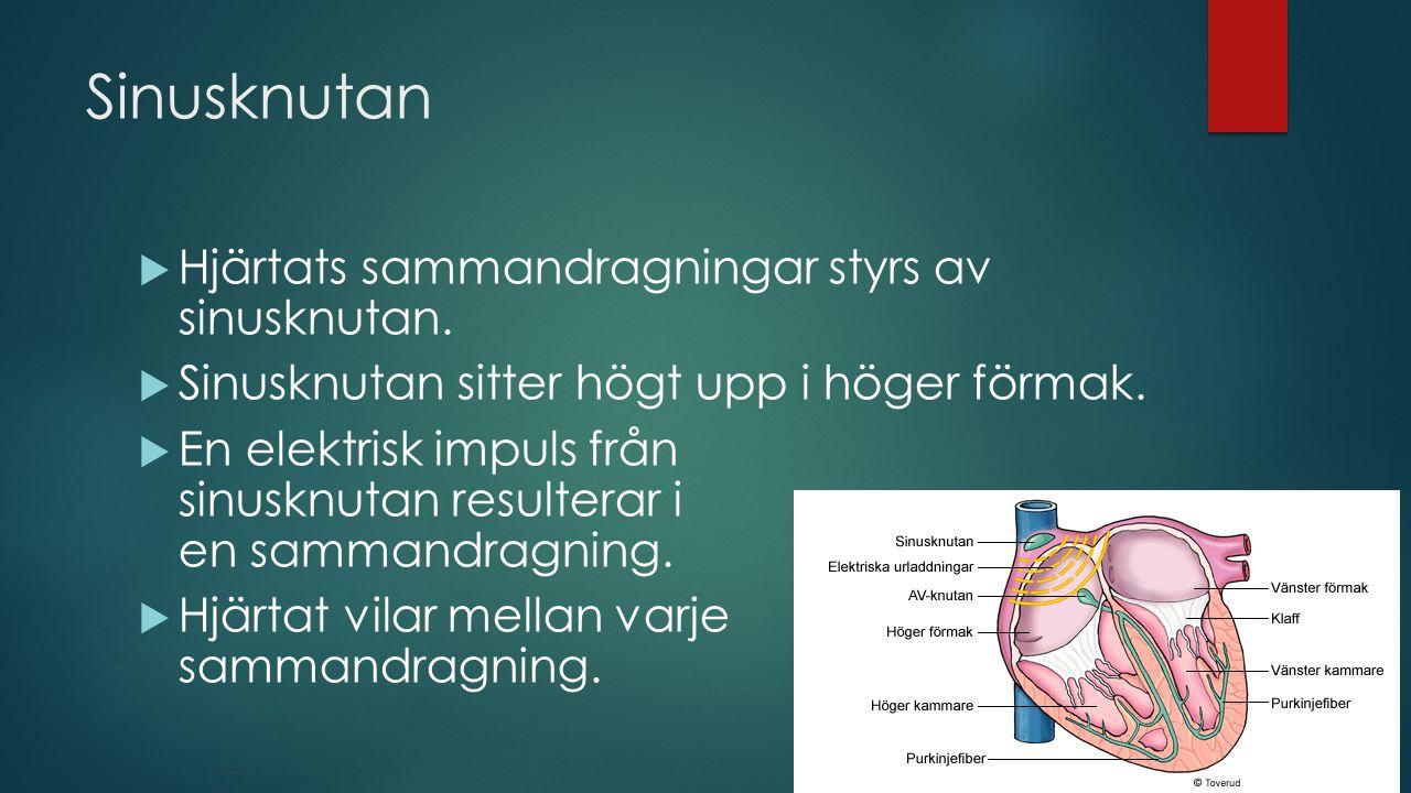Sinusknutan Hjärtats sammandragningar styrs av sinusknutan.