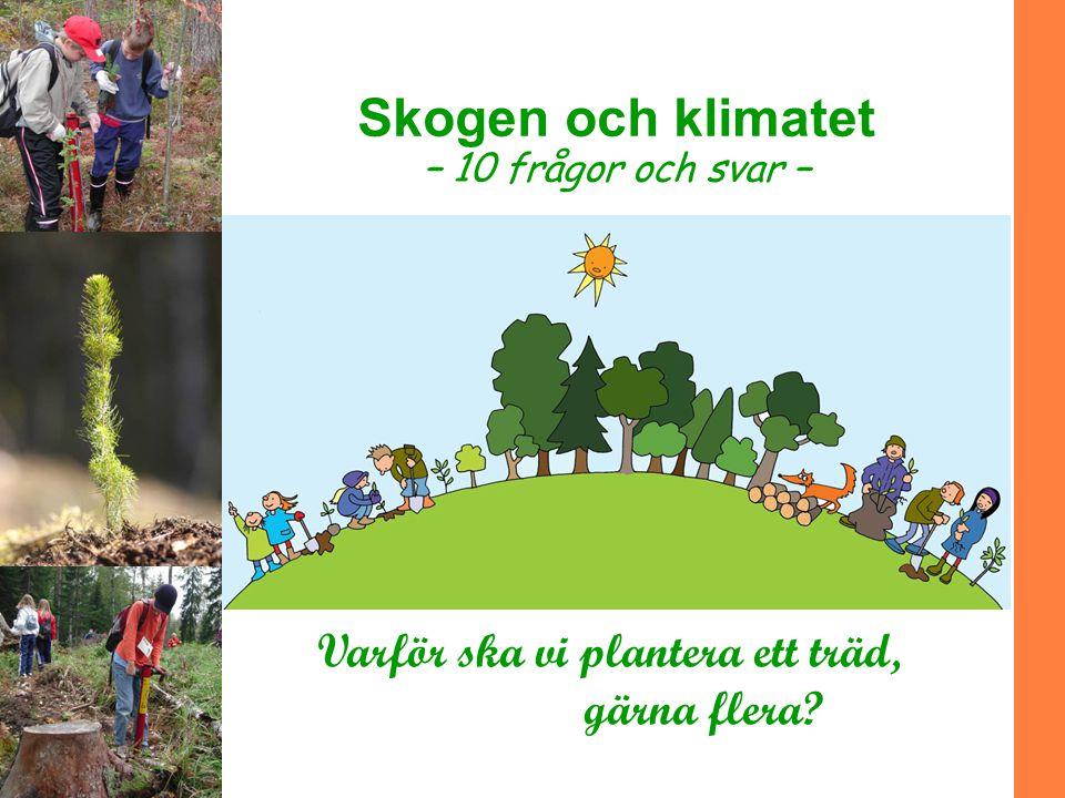Skogen och klimatet Varför ska vi plantera ett träd, gärna flera