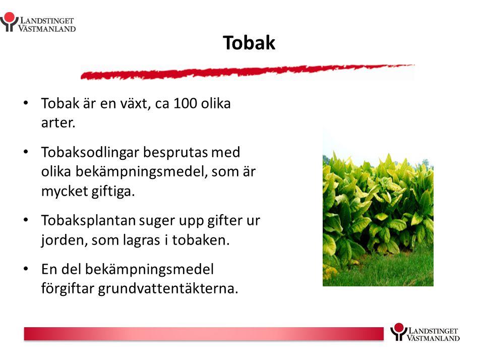 Tobak Tobak är en växt, ca 100 olika arter.