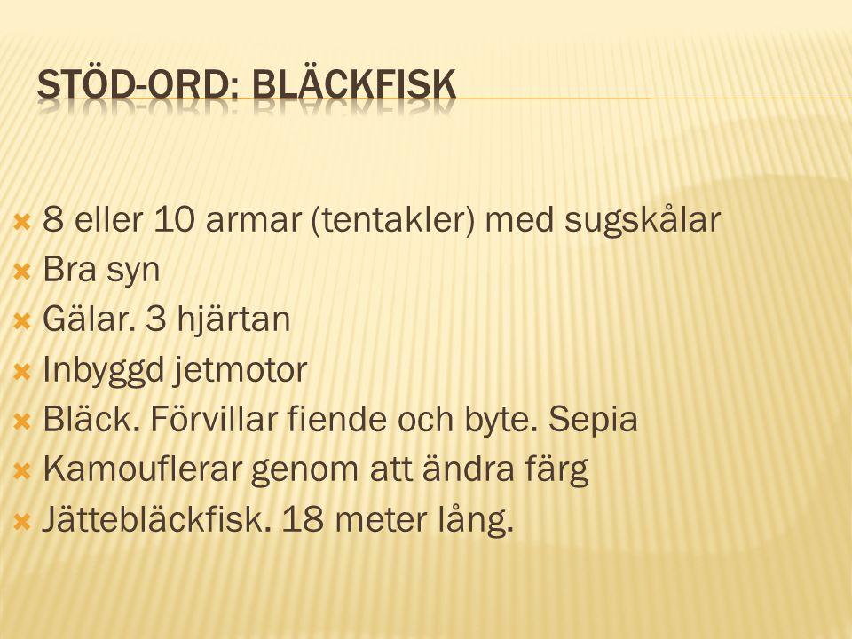 Stöd-ord: Bläckfisk 8 eller 10 armar (tentakler) med sugskålar Bra syn