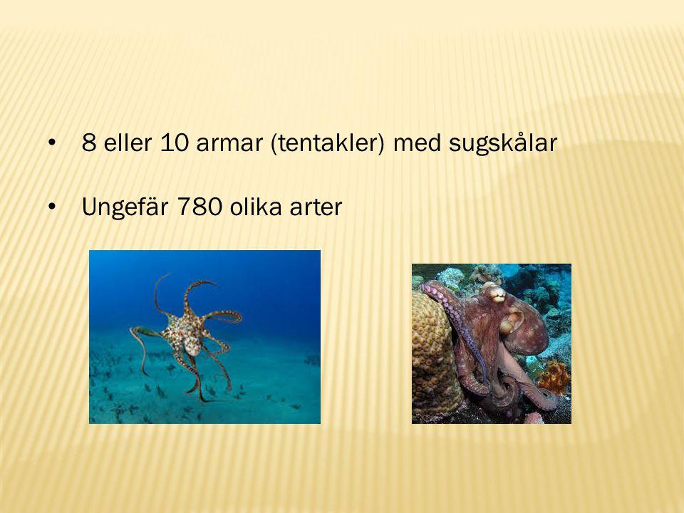 8 eller 10 armar (tentakler) med sugskålar