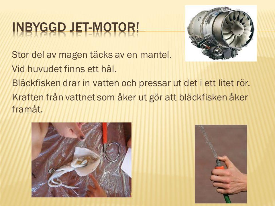 Inbyggd jet-motor! Stor del av magen täcks av en mantel.