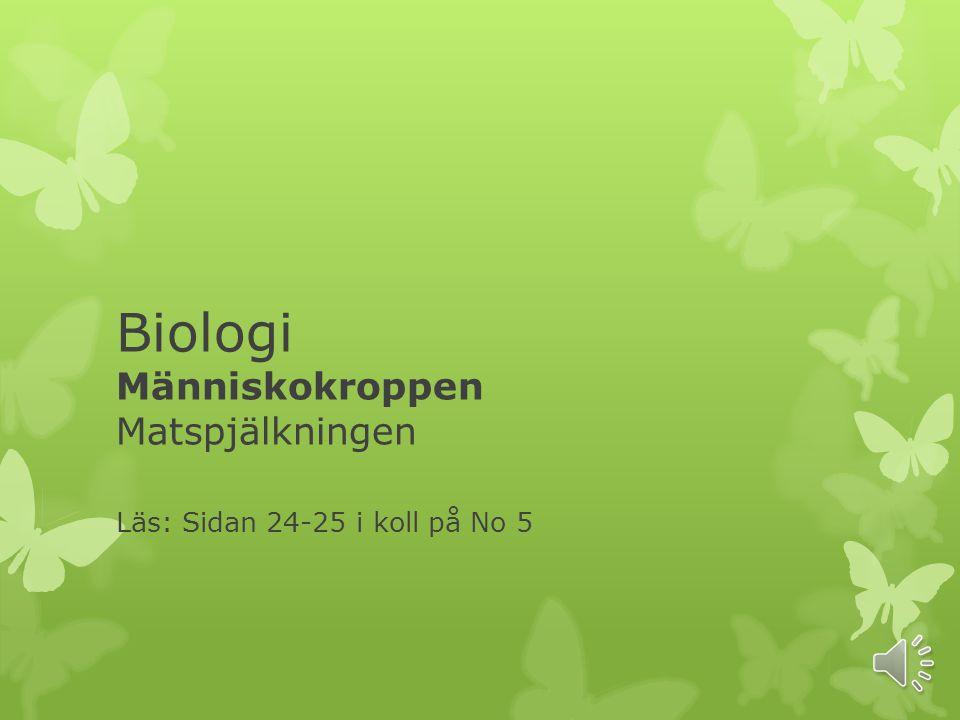 Biologi Människokroppen Matspjälkningen