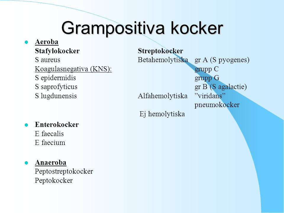 Grampositiva kocker