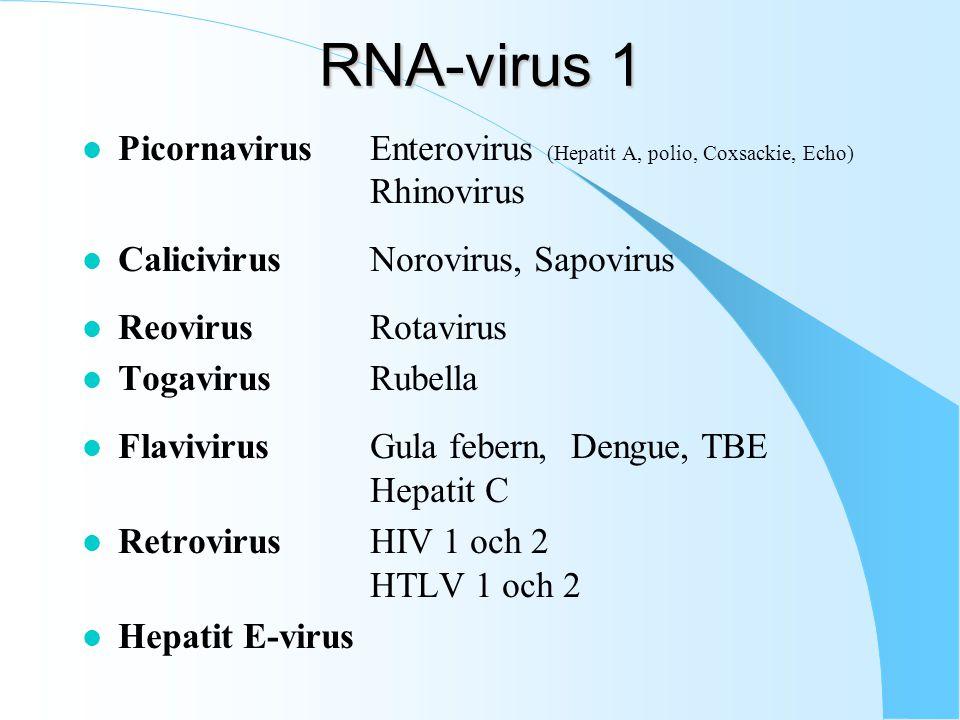 RNA-virus 1 Picornavirus Enterovirus (Hepatit A, polio, Coxsackie, Echo) Rhinovirus. Calicivirus Norovirus, Sapovirus.