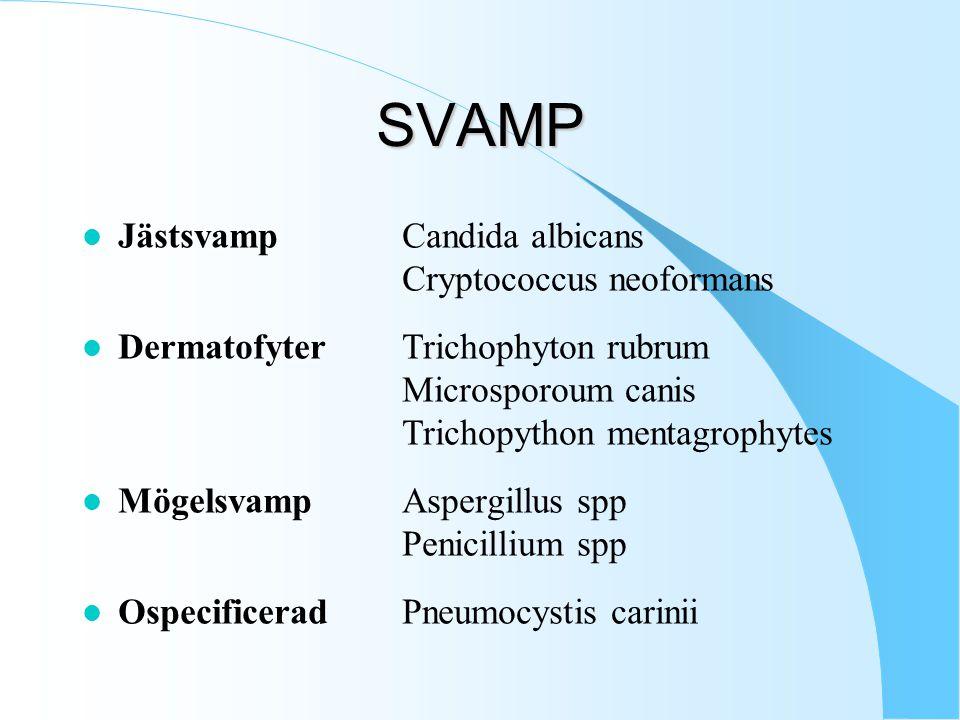 SVAMP Jästsvamp Candida albicans Cryptococcus neoformans
