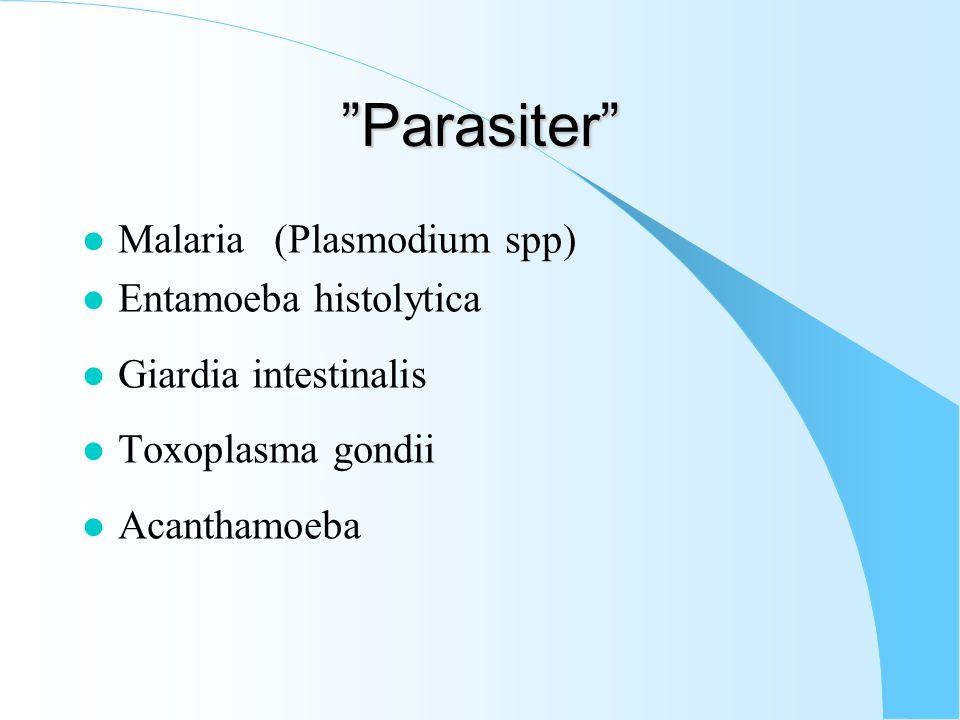 Parasiter Malaria (Plasmodium spp) Entamoeba histolytica
