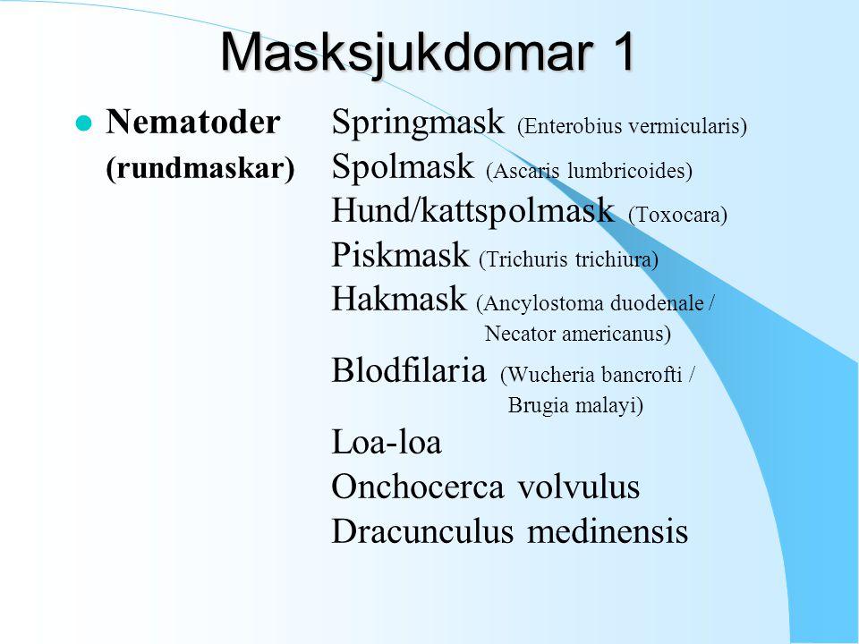 Masksjukdomar 1