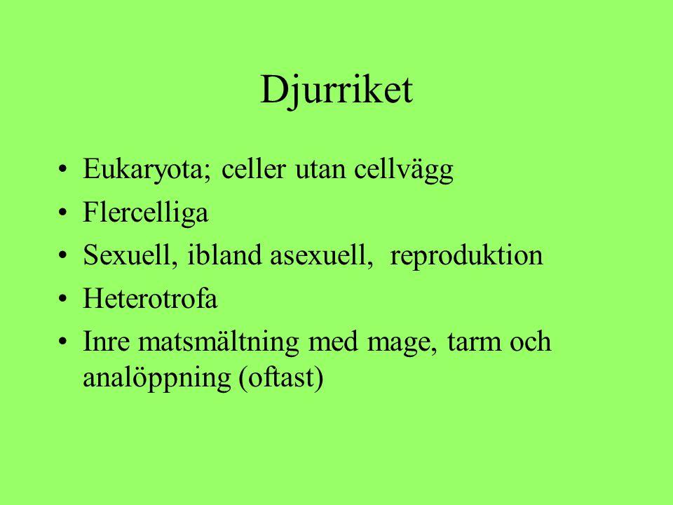 Djurriket Eukaryota; celler utan cellvägg Flercelliga