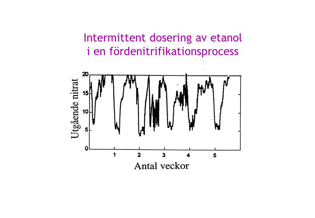 Intermittent dosering av etanol i en fördenitrifikationsprocess