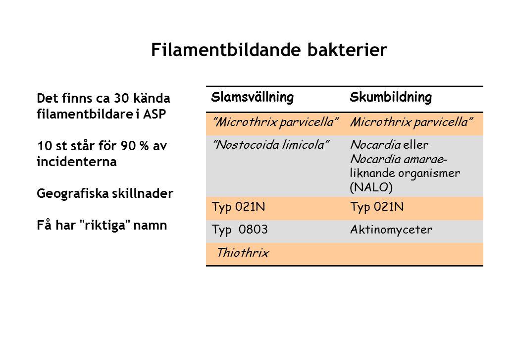 Filamentbildande bakterier