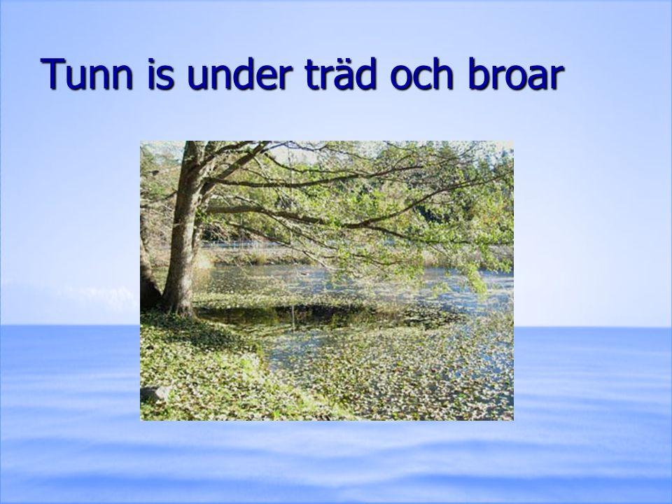Tunn is under träd och broar