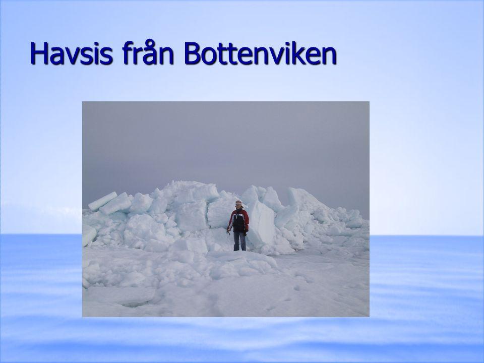Havsis från Bottenviken