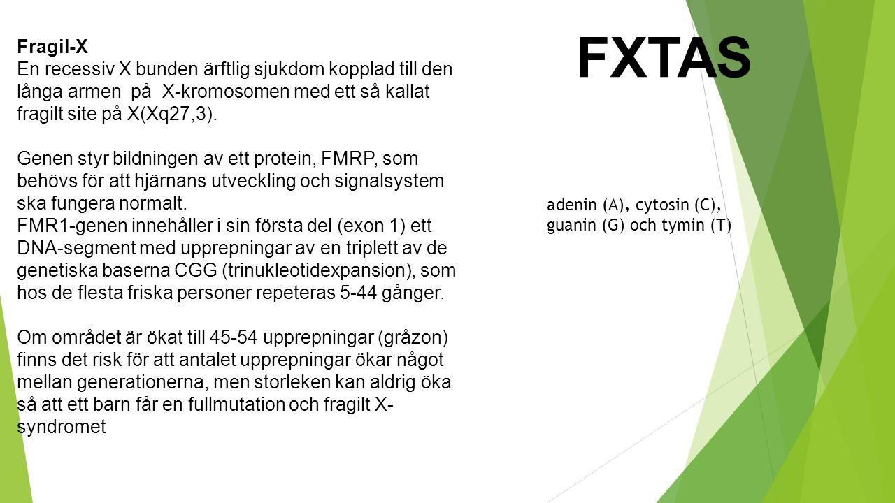 FXTAS Fragil-X. En recessiv X bunden ärftlig sjukdom kopplad till den långa armen på X-kromosomen med ett så kallat fragilt site på X(Xq27,3).