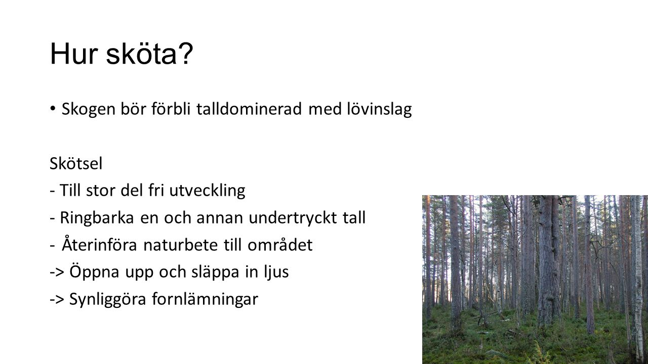 Hur sköta Skogen bör förbli talldominerad med lövinslag Skötsel