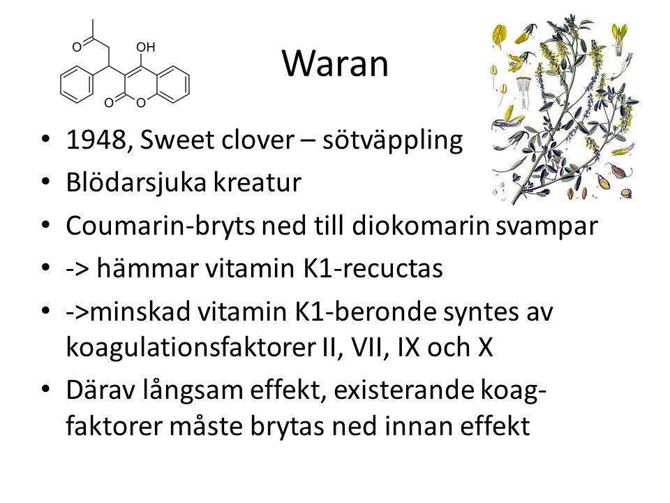 Waran 1948, Sweet clover – sötväppling Blödarsjuka kreatur