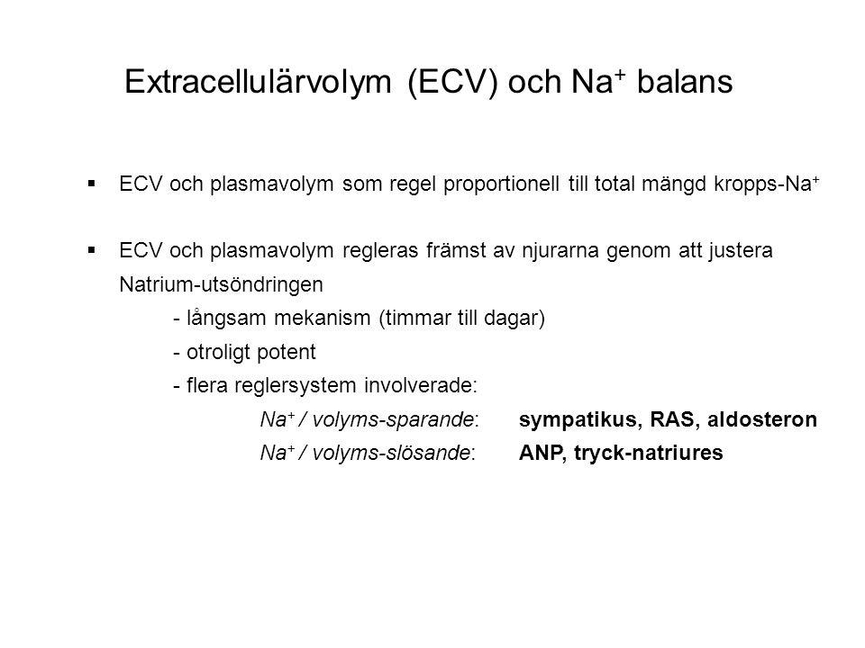 Extracellulärvolym (ECV) och Na+ balans