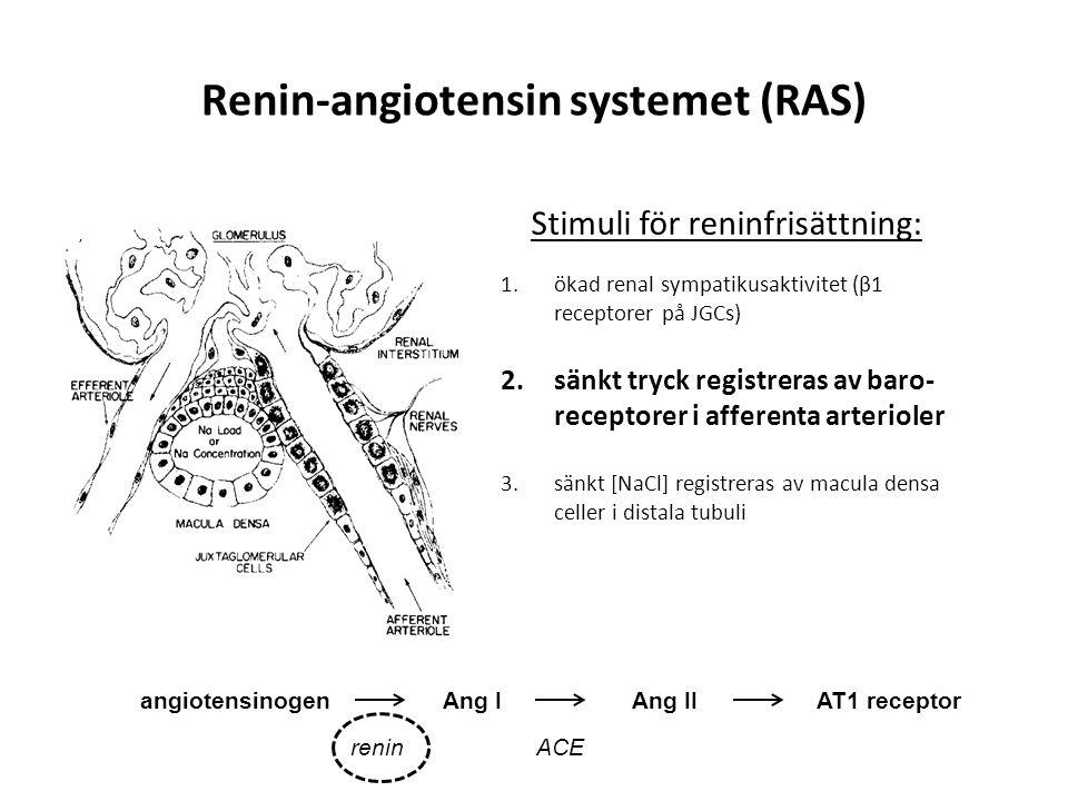 Renin-angiotensin systemet (RAS)