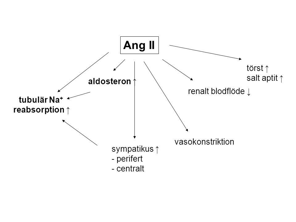 Ang II törst ↑ salt aptit ↑ aldosteron ↑ renalt blodflöde ↓