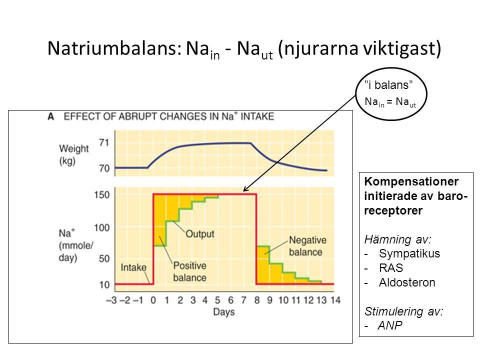 Natriumbalans: Nain - Naut (njurarna viktigast)