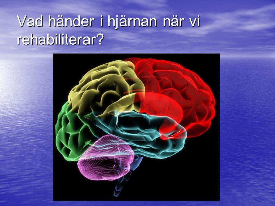 Vad händer i hjärnan när vi rehabiliterar