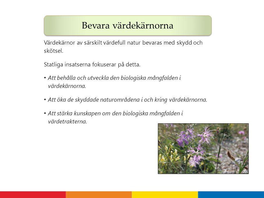 Bevara värdekärnorna Värdekärnor av särskilt värdefull natur bevaras med skydd och skötsel. Statliga insatserna fokuserar på detta.