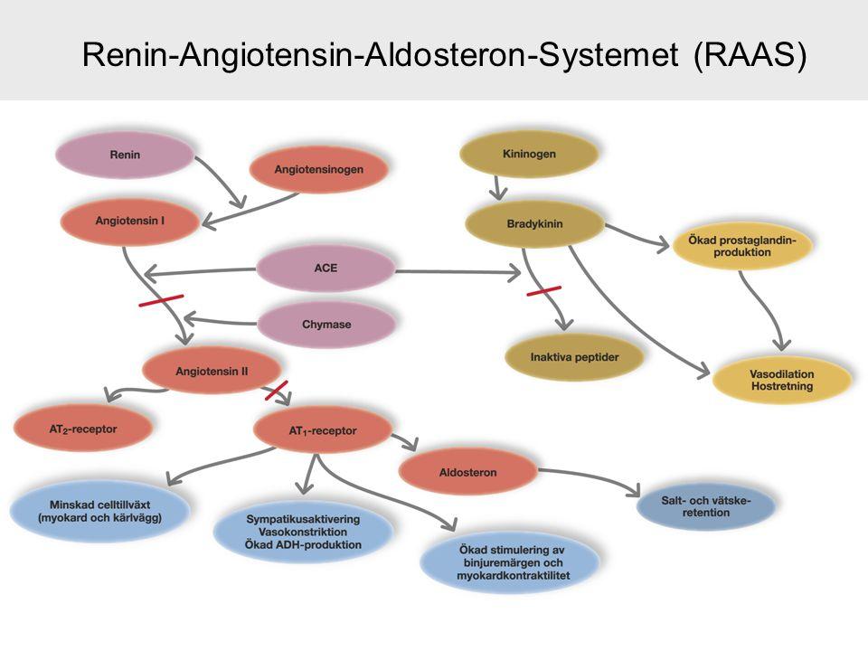 Renin-Angiotensin-Aldosteron-Systemet (RAAS)