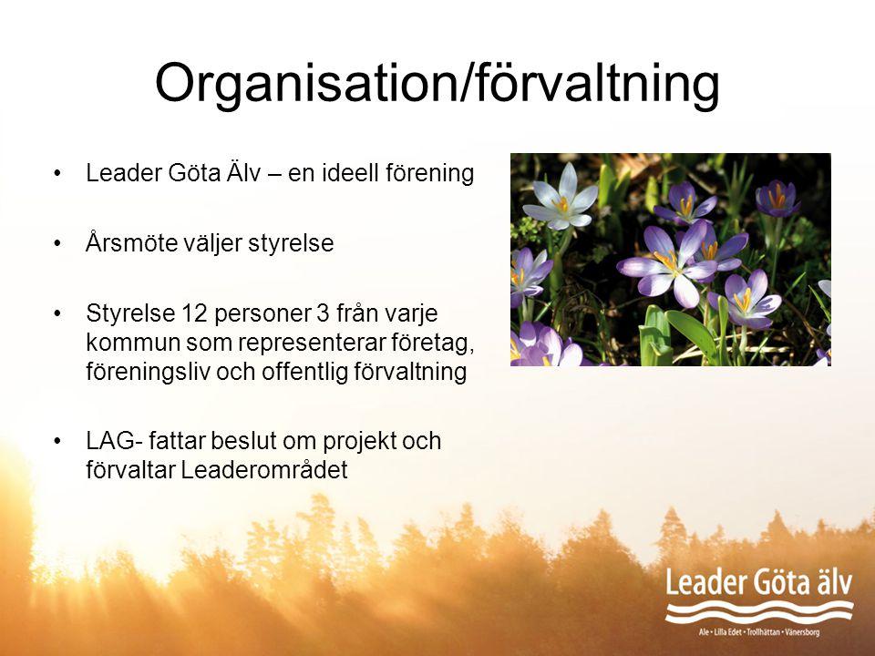 Organisation/förvaltning