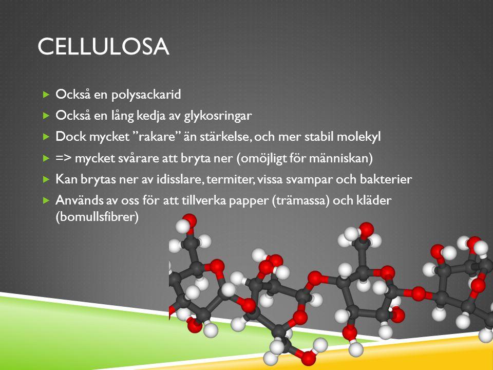 Cellulosa Också en polysackarid Också en lång kedja av glykosringar