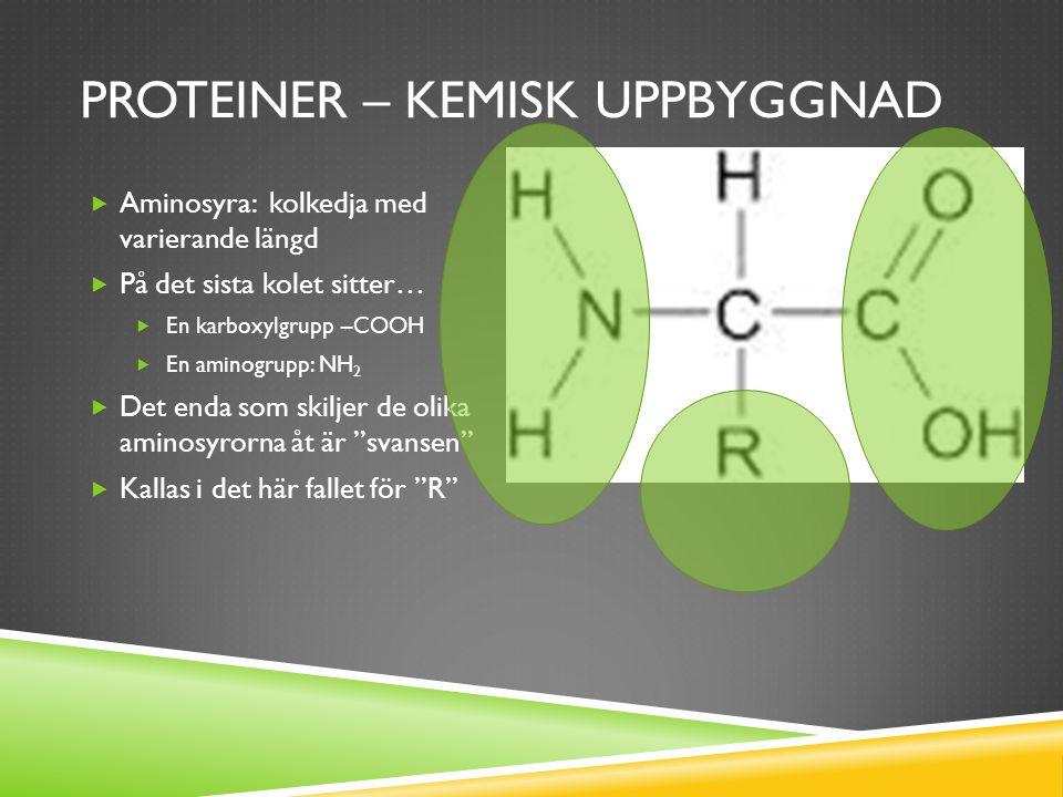 Proteiner – kemisk uppbyggnad