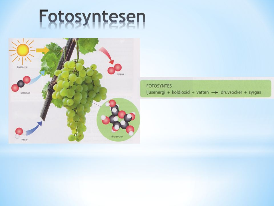 Fotosyntesen