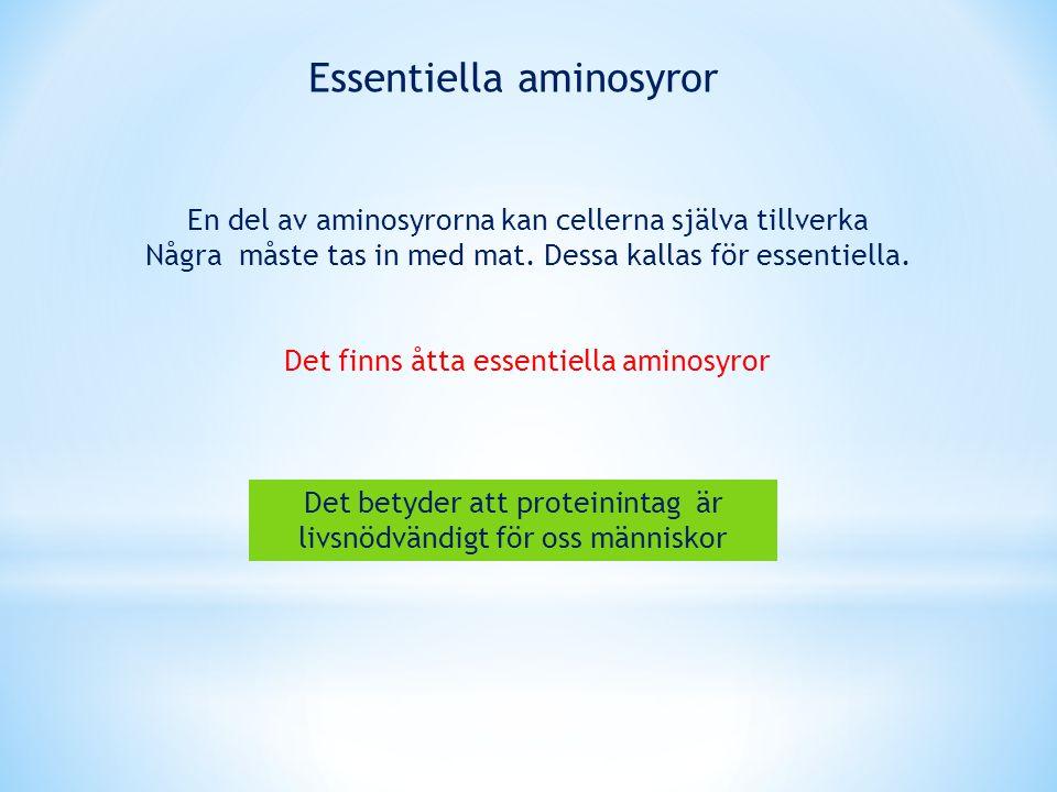 Essentiella aminosyror