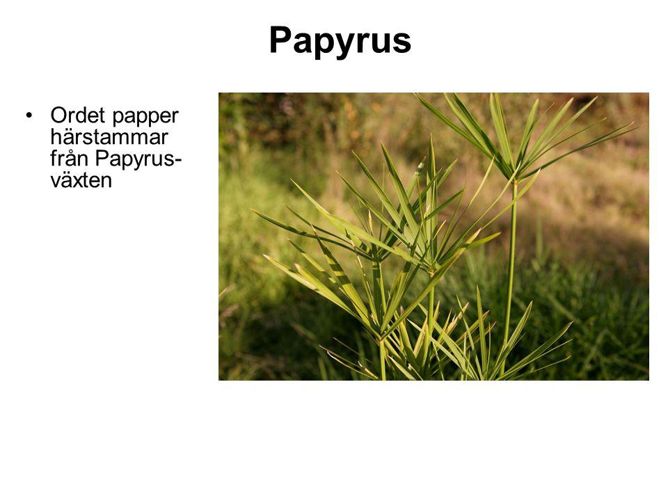 Papyrus Ordet papper härstammar från Papyrus-växten