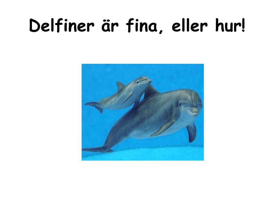 Delfiner är fina, eller hur!