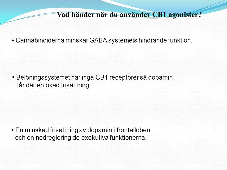 Vad händer när du använder CB1 agonister