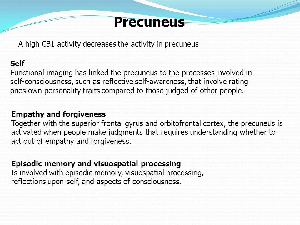 Precuneus A high CB1 activity decreases the activity in precuneus Self