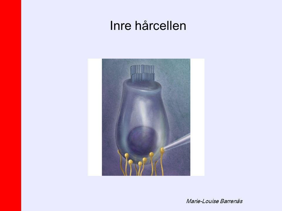 Marie-Louise Barrenäs